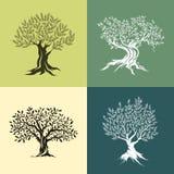 Sistema del icono de la silueta de los olivos Fotografía de archivo libre de regalías