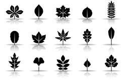 Sistema del icono de las hojas de otoño stock de ilustración