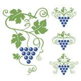 Sistema del icono de las uvas Imágenes de archivo libres de regalías