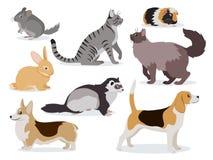 Sistema del icono de los animales domésticos, chinchilla gris linda, hurón mullido, gatos de pelo largo revestidos y nacionales l imagen de archivo