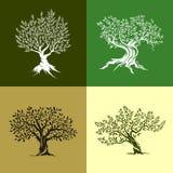 Sistema del icono de los olivos Imagen de archivo