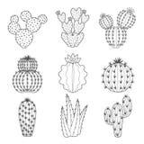 Sistema del icono del vector del cactus y del succulent del contorno Fotos de archivo libres de regalías