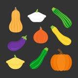 Sistema del icono del ejemplo del vector de calabaza, verdura de la calabaza ilustración del vector