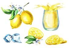 Sistema del jugo de limón con el chapoteo en el vidrio, cubos de hielo del ADN de las frutas Ejemplo dibujado mano de la acuarela Imagen de archivo