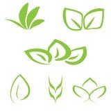 Sistema del logotipo vegetal verde simple Seis elementos aislados de la planta Fotografía de archivo
