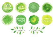 Sistema del logotipo del verde de la acuarela Hojas, insignias, letras, branche ilustración del vector