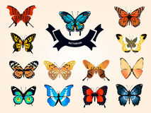 Sistema del monarca aislado realista anaranjado Fotografía de archivo libre de regalías