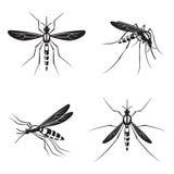 Sistema del mosquito Fotos de archivo libres de regalías