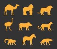 Sistema del oro del vector de animales del africano de las siluetas Foto de archivo libre de regalías