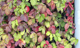 Sistema del otoño de hojas Fotos de archivo libres de regalías
