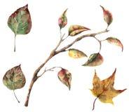 Sistema del otoño de la acuarela con las ramas de árbol y las hojas de la caída Clip art pintado a mano del otoño aislado en el f Imagen de archivo