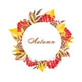 Sistema del oto?o de la acuarela con el serbal, las hojas, las setas, las manzanas, los conos, las flores y las bayas libre illustration
