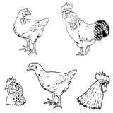 Sistema del pollo Imagenes de archivo