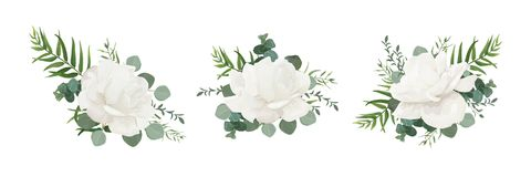 Sistema del ramo floral del vector de la peonía del polvo del blanco de jardín, flo de Rose stock de ilustración