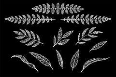 Sistema del separador del texto del modelo linear de las hojas y de las ramas Foto de archivo libre de regalías