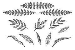 Sistema del separador del texto del modelo linear de las hojas y de las ramas Imagen de archivo