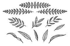 Sistema del separador del texto del modelo linear de las hojas y de las ramas Imágenes de archivo libres de regalías