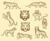 Sistema del tigre ilustración del vector