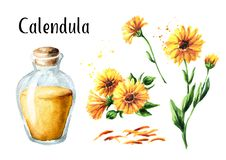 Sistema del tinte de la maravilla del Calendula con la botella fresca del flor del calendula y de cristal Ejemplo dibujado mano d stock de ilustración