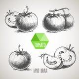 Sistema del tomate dibujado mano del estilo del bosquejo Comida orgánica del eco Foto de archivo