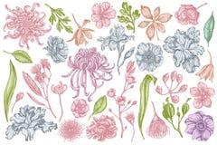 Sistema del vector del crisantemo japonés en colores pastel exhausto de la mano, lirio de la zarzamora, flor del eucalipto, anémo stock de ilustración