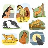 Sistema del vector de animales salvajes y caseros Ejemplo dibujado mano de la historieta Caballo, perro, gato, lobo, leopardo Foto de archivo