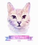 Sistema del vector de ejemplos de la acuarela Gato lindo Imagen de archivo