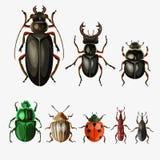 Sistema del vector de escarabajos stock de ilustración