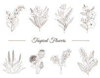Sistema del vector de flores tropicales aisladas en el fondo blanco libre illustration