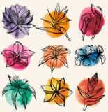 Sistema del vector de flores tropicales con c ilustración del vector