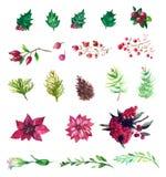 Sistema del vector de flores y de bayas de la acuarela Fotografía de archivo libre de regalías