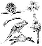 Sistema del vector de flores y del loro tropicales libre illustration