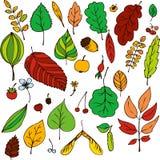 Sistema del vector de hojas Foto de archivo libre de regalías