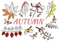 Sistema del vector de hojas en estilo del garabato Mano drenada libre illustration