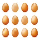 Sistema del vector de huevos realistas aislados en blanco Fotografía de archivo libre de regalías