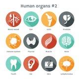 Sistema del vector de iconos planos con los órganos humanos