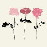 Sistema del vector de illustraton rosado de las rosas Imagen de archivo