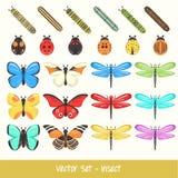 Sistema del vector de insecto Imagen de archivo