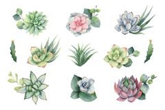 Sistema del vector de la acuarela con las hojas y los succulents del eucalipto libre illustration