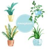Sistema del vector de la acuarela de houseplants Ilustración Fotografía de archivo