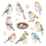 Sistema del vector de la acuarela de pájaros Foto de archivo libre de regalías