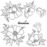Sistema del vector de la flor o Windflower de la anémona del esquema del dibujo de la mano, brote y hoja en negro aislado en el f