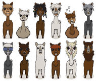 Sistema del vector de la historieta de la alpaca libre illustration