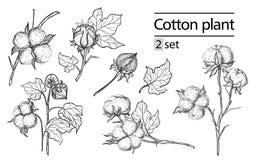 Sistema del vector de la planta de algodón de la tinta del drenaje de la mano Foto de archivo libre de regalías