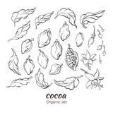 Sistema del vector de la rama del cacao stock de ilustración