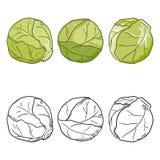 Sistema del vector de las coles de Bruselas de la historieta y del bosquejo libre illustration