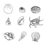 Sistema del vector de las conchas marinas en el fondo blanco Foto de archivo