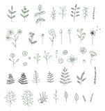 Sistema del vector de las flores blancos y negros, hierbas, plantas ilustración del vector