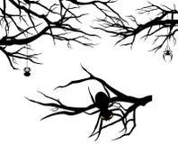 Sistema del vector de las ramas y de las arañas de árbol Fotografía de archivo