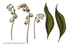 Sistema del vector de lirio de los valles coloreado exhausto de la mano stock de ilustración